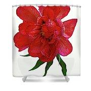 Beautiful Peony Flower. Shower Curtain