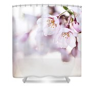 Beautiful Pink Cherry Blossom Shower Curtain