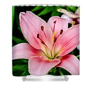 Beautiful Pink Lily Shower Curtain