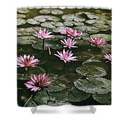 Beautiful Pink Lotus Water Lilies Bloom Shower Curtain
