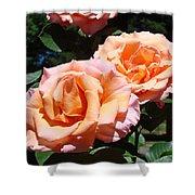 Beautiful Pink Orange Rose Flowers Garden Baslee Troutman  Shower Curtain
