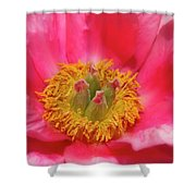 Beautiful Pink Peony Flower Vertical Shower Curtain