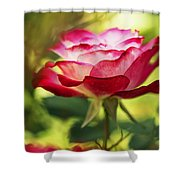 Beautiful Pink Rose Blooming In Garden Shower Curtain