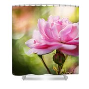 Beautiful Pink Rose Blooming In Garden With Natural Bokeh Shower Curtain