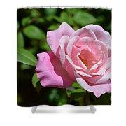 Beautiful Pink Rose Shower Curtain