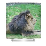 Beautiful Profile Of A Resting Lion In Green Grass Shower Curtain