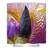 Beautiful Purple Iris Flowwer Floral Art Print Baslee Troutman Shower Curtain