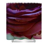 Beautiful Purple Rose Macro 2 Shower Curtain