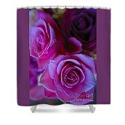 Beautiful Purple Roses 2 Shower Curtain