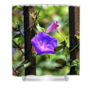 Beautiful Railroad Vine Flower II  Shower Curtain