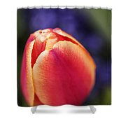 Beautiful Red And Orange Colored Tulip  Shower Curtain