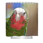 Beautiful Red Feathers On The Throat Of A Green Conure Bird Shower Curtain