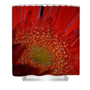 Beautiful Red Shower Curtain