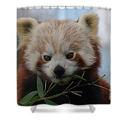 Beautiful Red Panda Shower Curtain