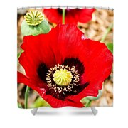 Beautiful Red Poppy Shower Curtain