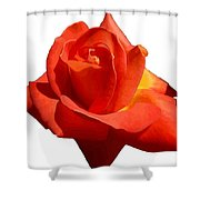 Beautiful Red Rose Photograph Vector Shower Curtain