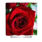 Beautiful Red Rose Abstract 3 Shower Curtain