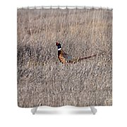 Beautiful Rooster Pheasant  Shower Curtain