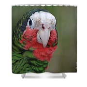 Beautiful Ruffled Green Feathers On A Conure Shower Curtain