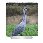 Beautiful Sandhill Crane Shower Curtain