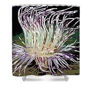 Beautiful Sea Anemone 1 Shower Curtain