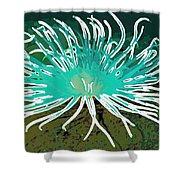 Beautiful Sea Anemone 2 Shower Curtain