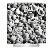 Beautiful Seashells Black And White Shower Curtain