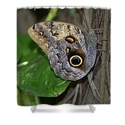 Beautiful Shot Of A Brown Morpho Butterfly Resting  Shower Curtain