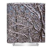 Beautiful Snow Shower Curtain