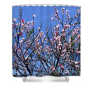 Beautiful Spring. Blooming Tree 1 Shower Curtain