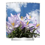 Beautiful Spring Flower Blossom In Sky Background Shower Curtain