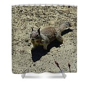 Beautiful Squirrel Standing In A Sandy Area In California Shower Curtain
