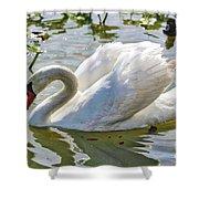 Beautiful Swan Shower Curtain