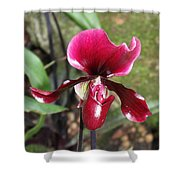 Beautiful Temptation 2 Shower Curtain