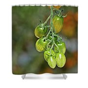 Beautiful Tomatoes Shower Curtain