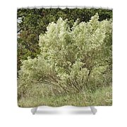 Beautiful Tree At Autumn  Shower Curtain