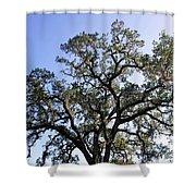 Beautiful Tree Blue Sky Sunshine Shower Curtain