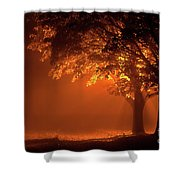 Beautiful Trees At Night With Orange Light Shower Curtain