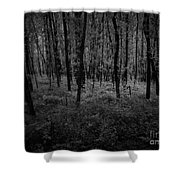 Beautiful Trees Shower Curtain