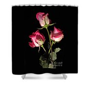 Beautiful Two Tone Roses 3 Shower Curtain