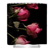 Beautiful Two Tone Roses 4 Shower Curtain