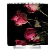 Beautiful Two Tone Roses 6 Shower Curtain