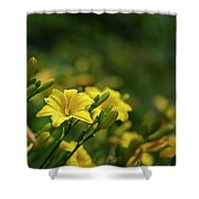 Beautiful Vibrant Yellow Lily Flower In Summer Sun Shower Curtain