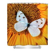 Beautiful White Butterfly On Sunflower Shower Curtain