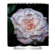 Beautiful White Camellia Shower Curtain
