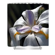 Beautiful White Day Lily Shower Curtain