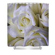 Beautiful White Roses Shower Curtain