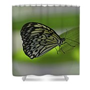 Beautiful White Tree Nymph Butterfly On  A Leaf Shower Curtain