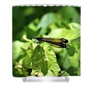 Beautiful Wings Shower Curtain