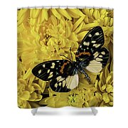 Beautiful Wings On Yellow Mums Shower Curtain